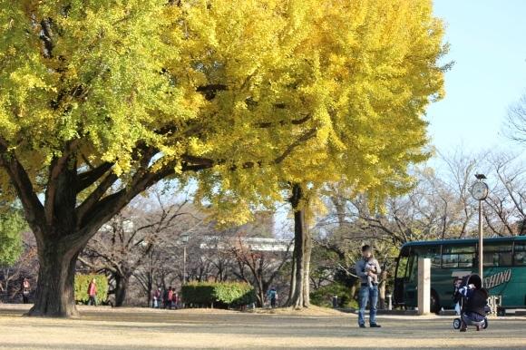 熊本城の紅葉の楽しみ方は?_c0052304_06595786.jpg