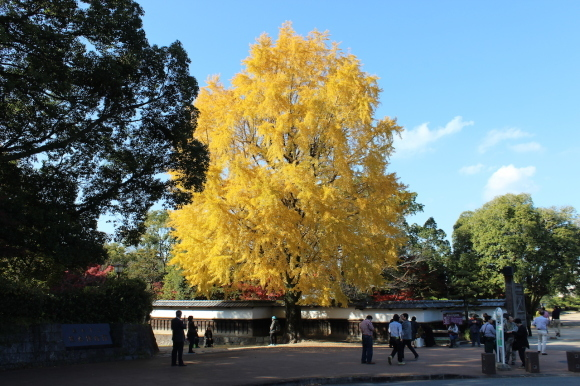 熊本城の紅葉の楽しみ方は?_c0052304_07145442.jpg