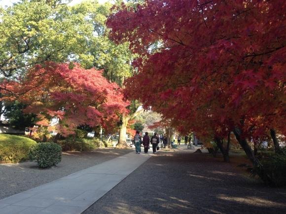 熊本城の紅葉の楽しみ方は?_c0052304_07175293.jpg
