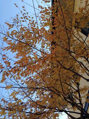 秋が深まってます_d0169411_20383972.jpg