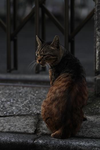 [猫的]アフリカ_e0090124_0104745.jpg