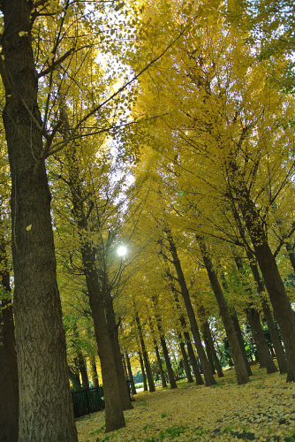 秋深まりて_e0089232_15285195.jpg