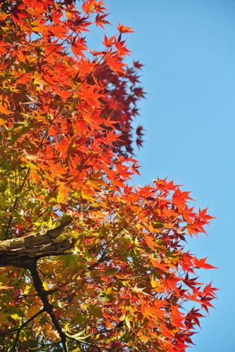 秋深まりて_e0089232_15290919.jpg