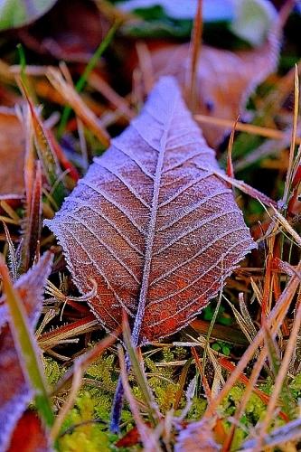霜々のものたち_b0314043_21313520.jpg