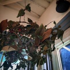 冬の植物。_b0072459_14133272.jpg