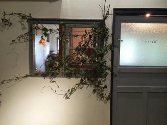 冬の植物。_b0072459_1413794.jpg