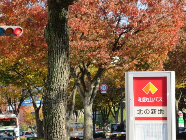 秋も深まりました。「バス停狩り」のお誘いです。_c0001670_13502411.jpg