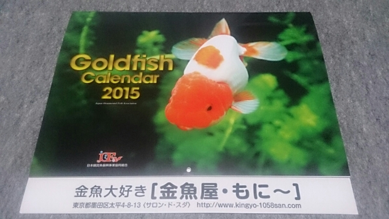 金魚カレンダーGET!!_b0298605_3314277.jpg