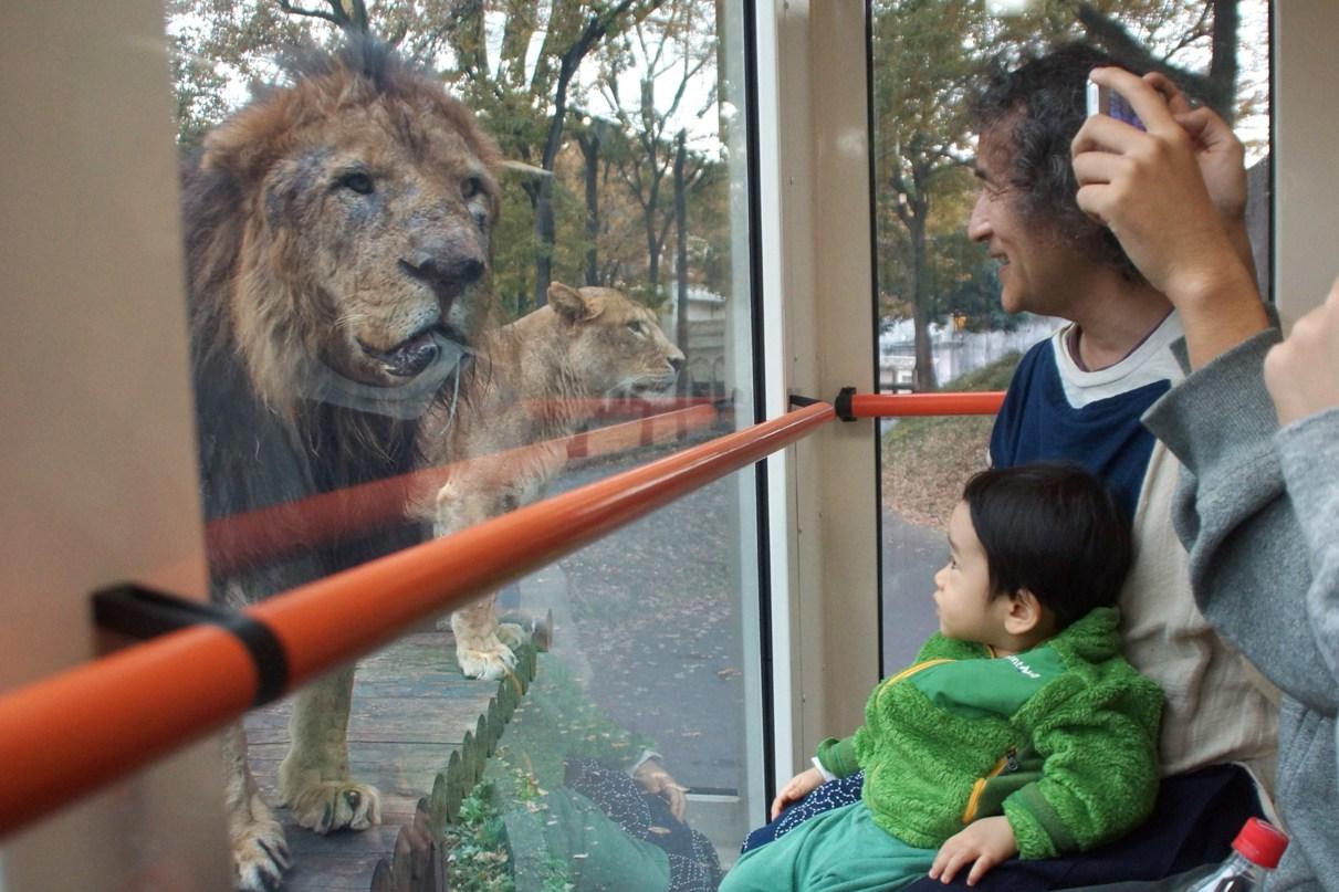 ライオンバス50周年@多摩動物公園_f0006713_23123705.jpg