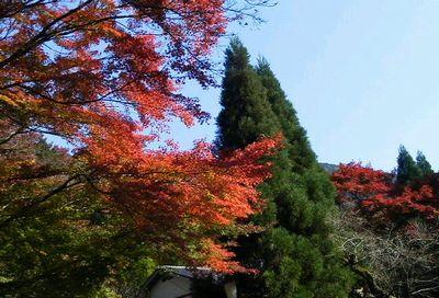 紅葉も見頃です_e0234016_1943935.jpg