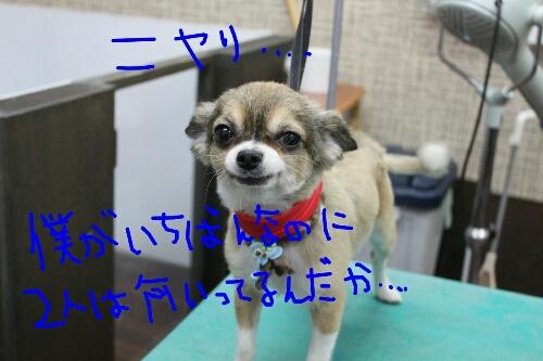 リス_b0130018_21395592.jpg