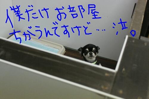 リス_b0130018_2141293.jpg