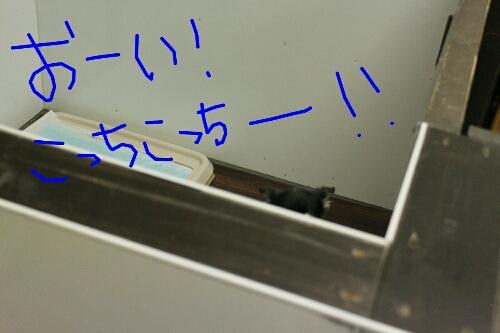 リス_b0130018_2141779.jpg