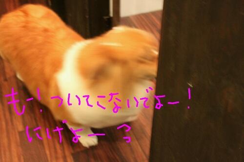 b0130018_2210426.jpg