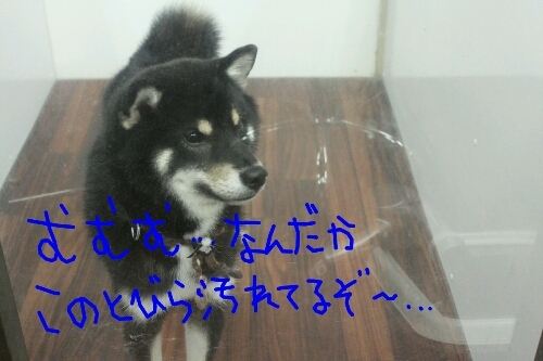 リス_b0130018_2224121.jpg