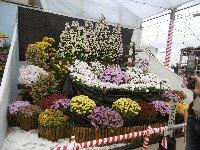 花とみかんとお魚と…恒例のみかん狩り_c0133422_0543272.jpg