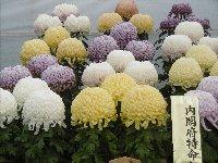 花とみかんとお魚と…恒例のみかん狩り_c0133422_056898.jpg