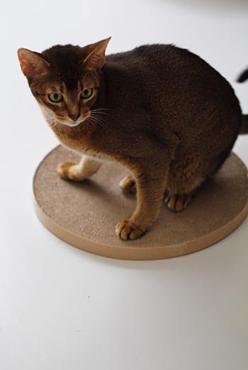 [猫的]猫転送装置?_e0090124_0153826.jpg