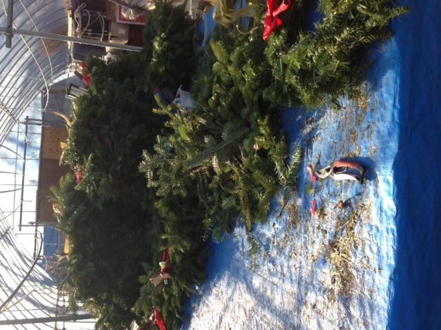クリスマスリース_b0174425_13202485.jpg