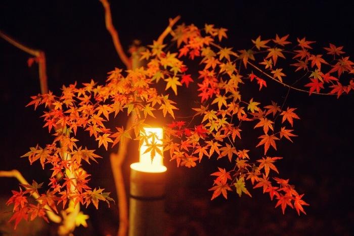 Red  ・・・くれなゐ・・・_f0333031_08084815.jpg