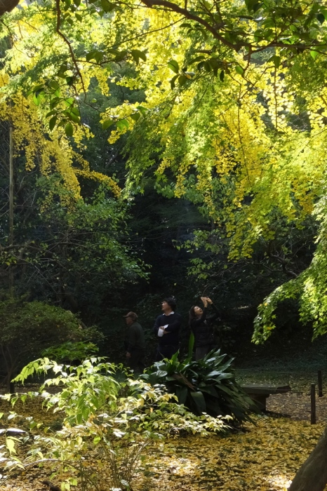 秋の「三渓園」 聴秋閣公開_f0156448_12242495.jpg