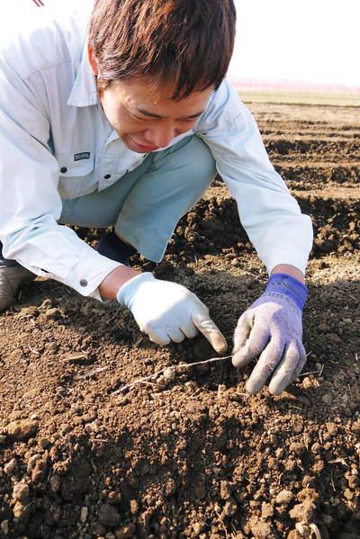 有機栽培の水田ごぼう ごぼうの種まき その2_a0254656_17244285.jpg