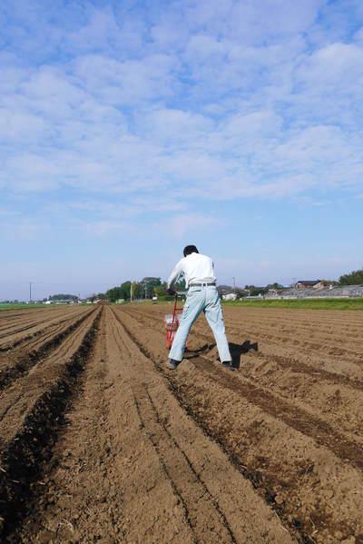 有機栽培の水田ごぼう ごぼうの種まき その2_a0254656_1758263.jpg