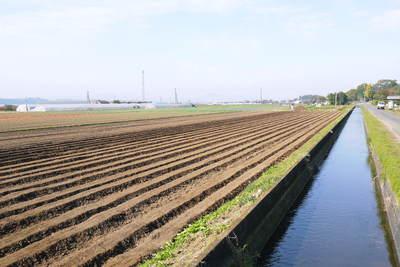 有機栽培の水田ごぼう ごぼうの種まき その2_a0254656_18292760.jpg