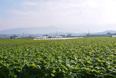 有機栽培の水田ごぼう ごぼうの種まき その2_a0254656_18405960.jpg
