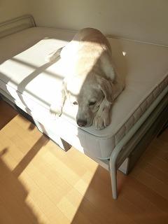 with dog   日向ぼっこ?_a0165160_06333560.jpg
