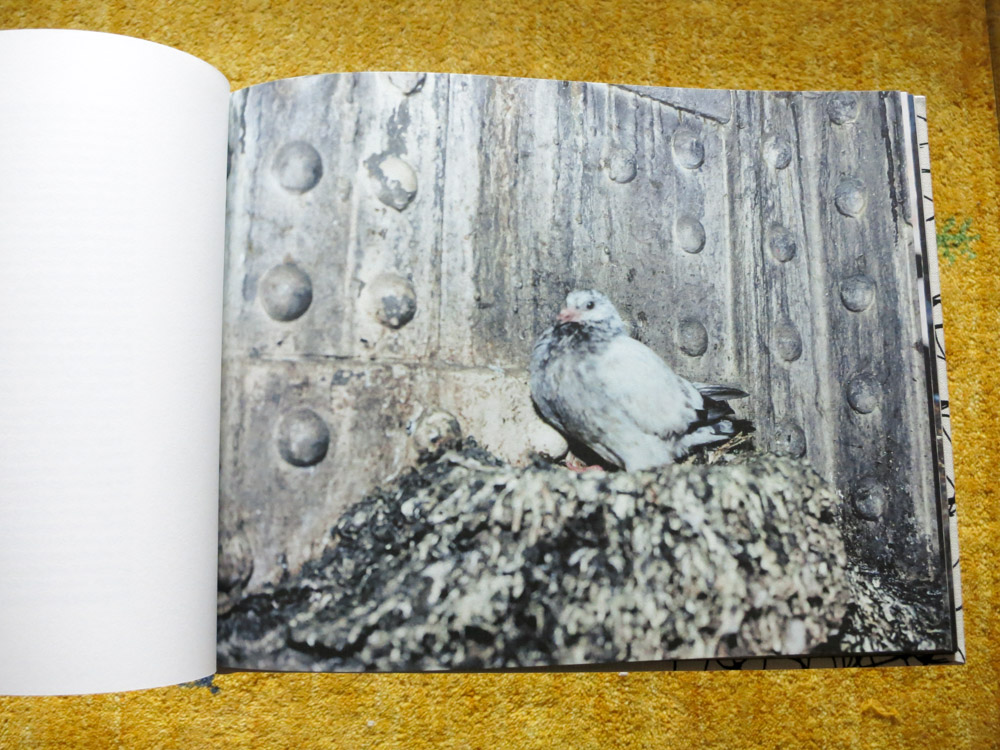 Stephen Gill 「Pigeons」_c0016177_1038511.jpg