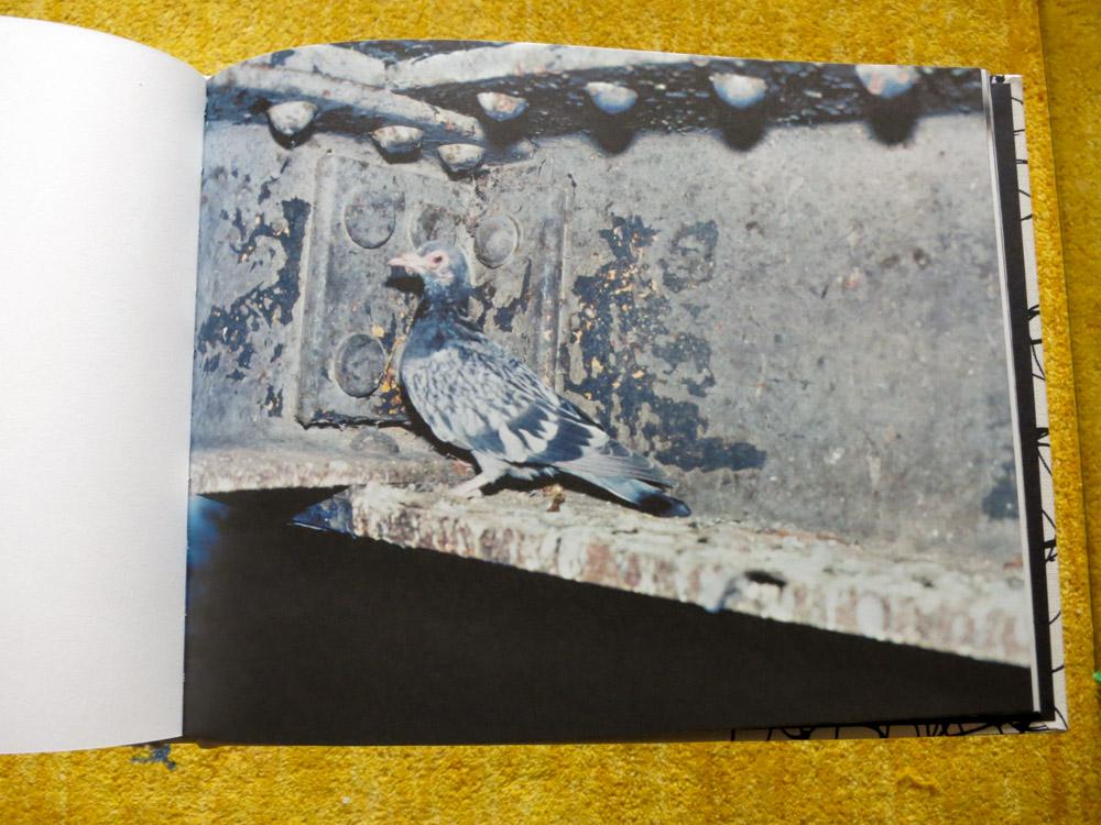 Stephen Gill 「Pigeons」_c0016177_1039513.jpg