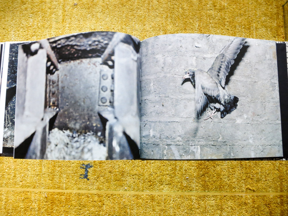 Stephen Gill 「Pigeons」_c0016177_10401366.jpg