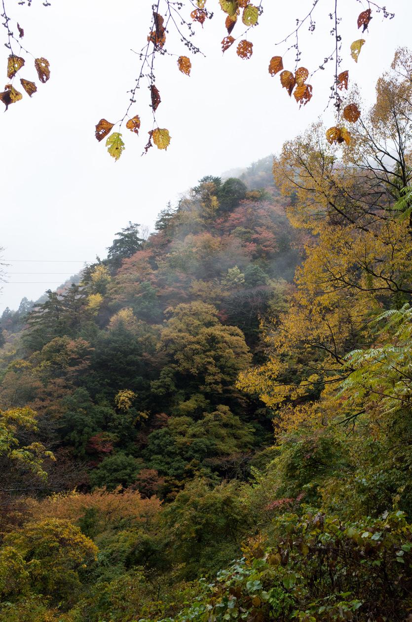 静岡県道389号水窪森線 紅葉 201...