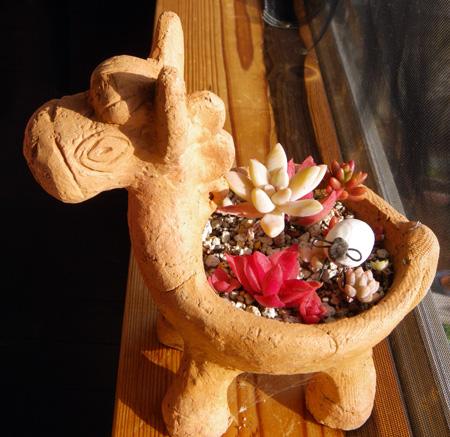 多肉の鉢にヒツジさん、種から育てたビオラなど_a0136293_16513178.jpg