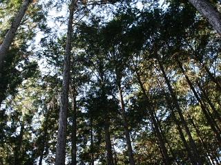 山林見学_e0145995_730484.jpg