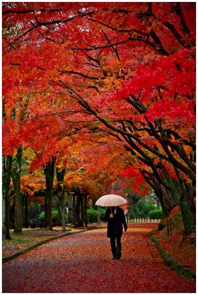 雨の回廊_d0272207_2033164.jpg