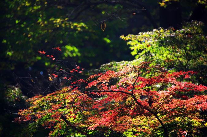 平林寺の紅葉1_a0263109_1443263.jpg