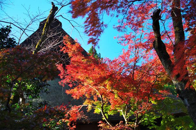平林寺の紅葉1_a0263109_1443626.jpg