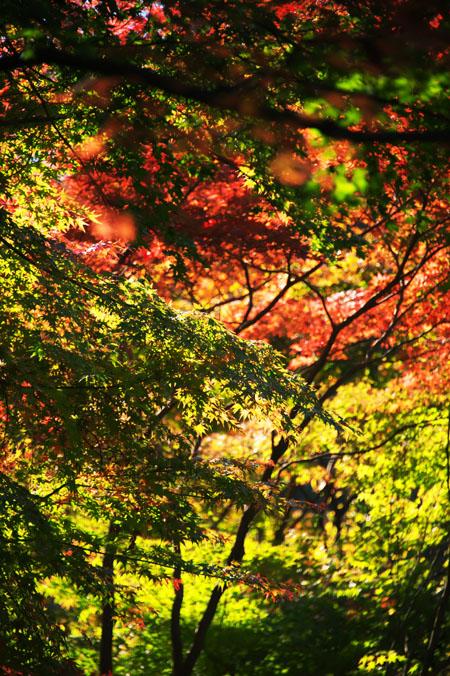 平林寺の紅葉1_a0263109_1444053.jpg