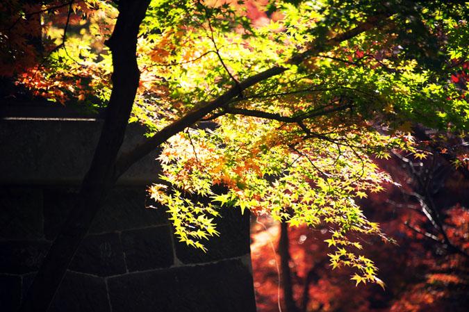 平林寺の紅葉1_a0263109_1444747.jpg