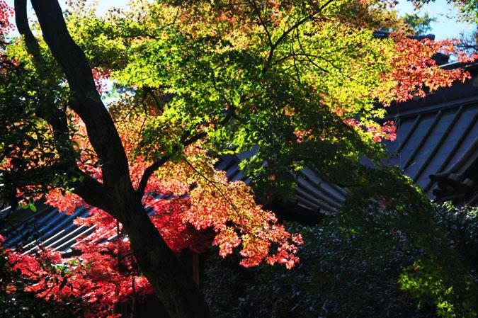 平林寺の紅葉1_a0263109_1462222.jpg
