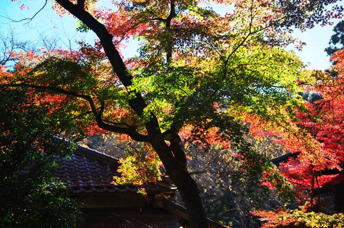 平林寺の紅葉1_a0263109_1463396.jpg