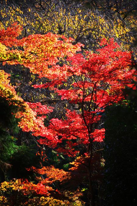 平林寺の紅葉1_a0263109_148324.jpg