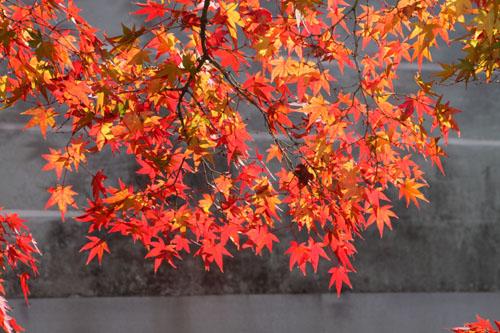 14紅葉めぐり 40 養源院 _e0048413_2111873.jpg