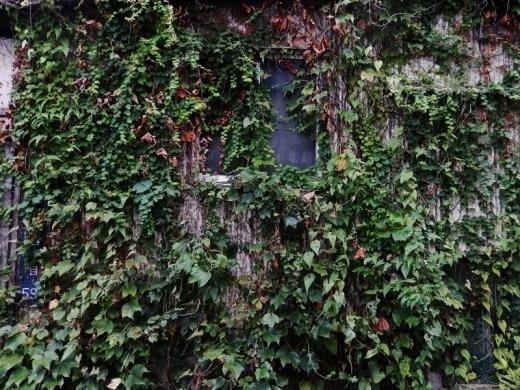 植物壁_c0156717_10315460.jpg