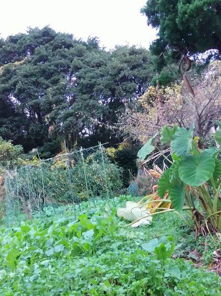 季節外れの「豆の花」_a0125419_16401007.jpg