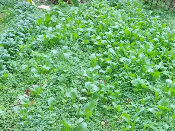 季節外れの「豆の花」_a0125419_16412481.jpg
