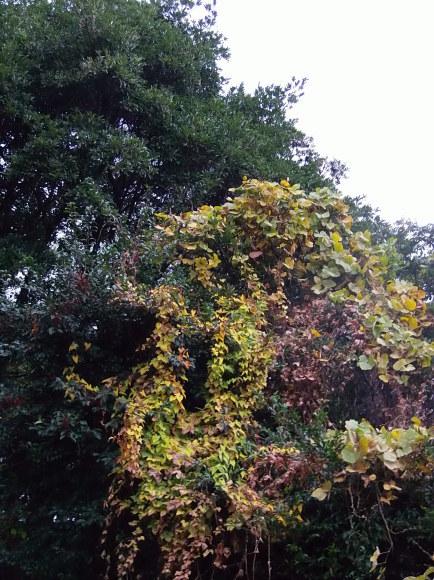 季節外れの「豆の花」_a0125419_16421809.jpg