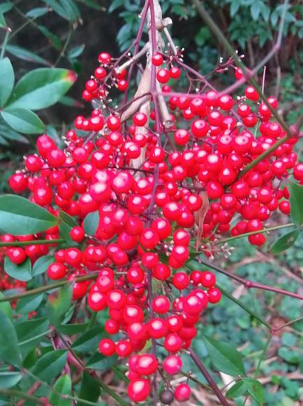 季節外れの「豆の花」_a0125419_16430164.jpg